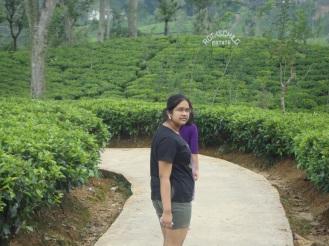 चहाच्या बागेत - श्रीलंका