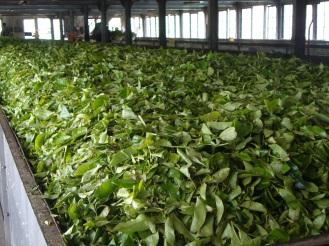 चहा फॅक्टरी - श्रीलंका