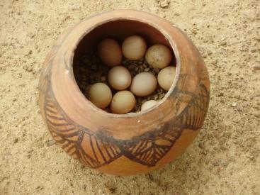 गिनीफाउल अंडी