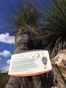 photo-4-grass-tree