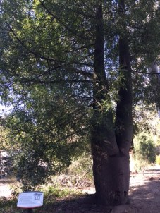 photo3-bottle-tree